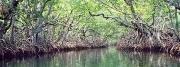 Mangrove forests are increasing in Texas. Credit: National Oceanic and Atmospheric Administration