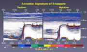 Typical acoustic signatures of bottomfish, during day and night surveys. Credit: National Oceanic and Atmospheric Administration, Reka Domokos