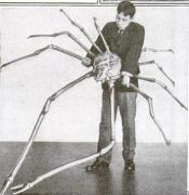 Japanese spider crab. Credit: Popular Science Magazine, June 1920.