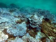 Severely bleached coral in Papahanaumokuakea Marine National Monument, Hawaii. Credit: National Oceanic and Atmospheric Administration.